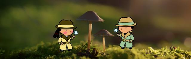 Buscadores de setas