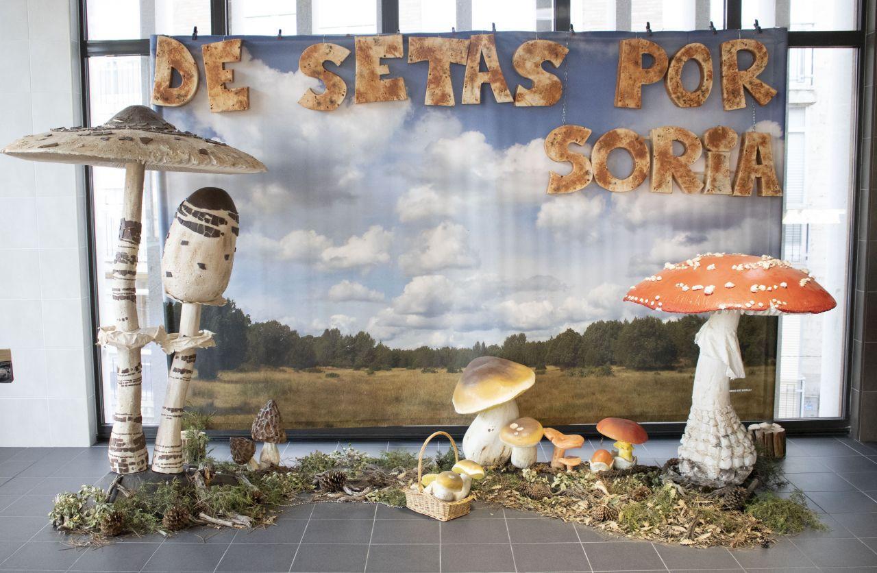 Jornadas Micológicas de Soria 2020