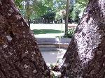 árbol con diente